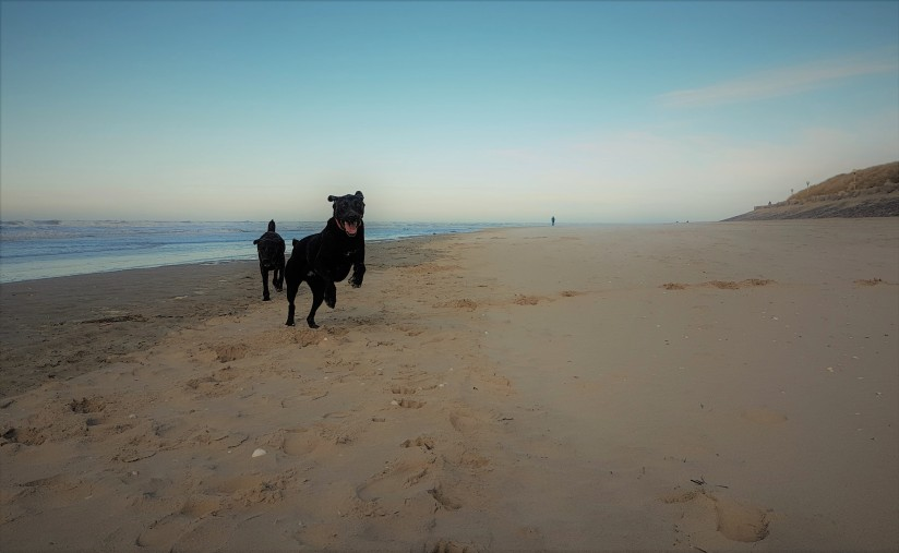 louie-and-nellie-excited-to-run-on-the-beach1