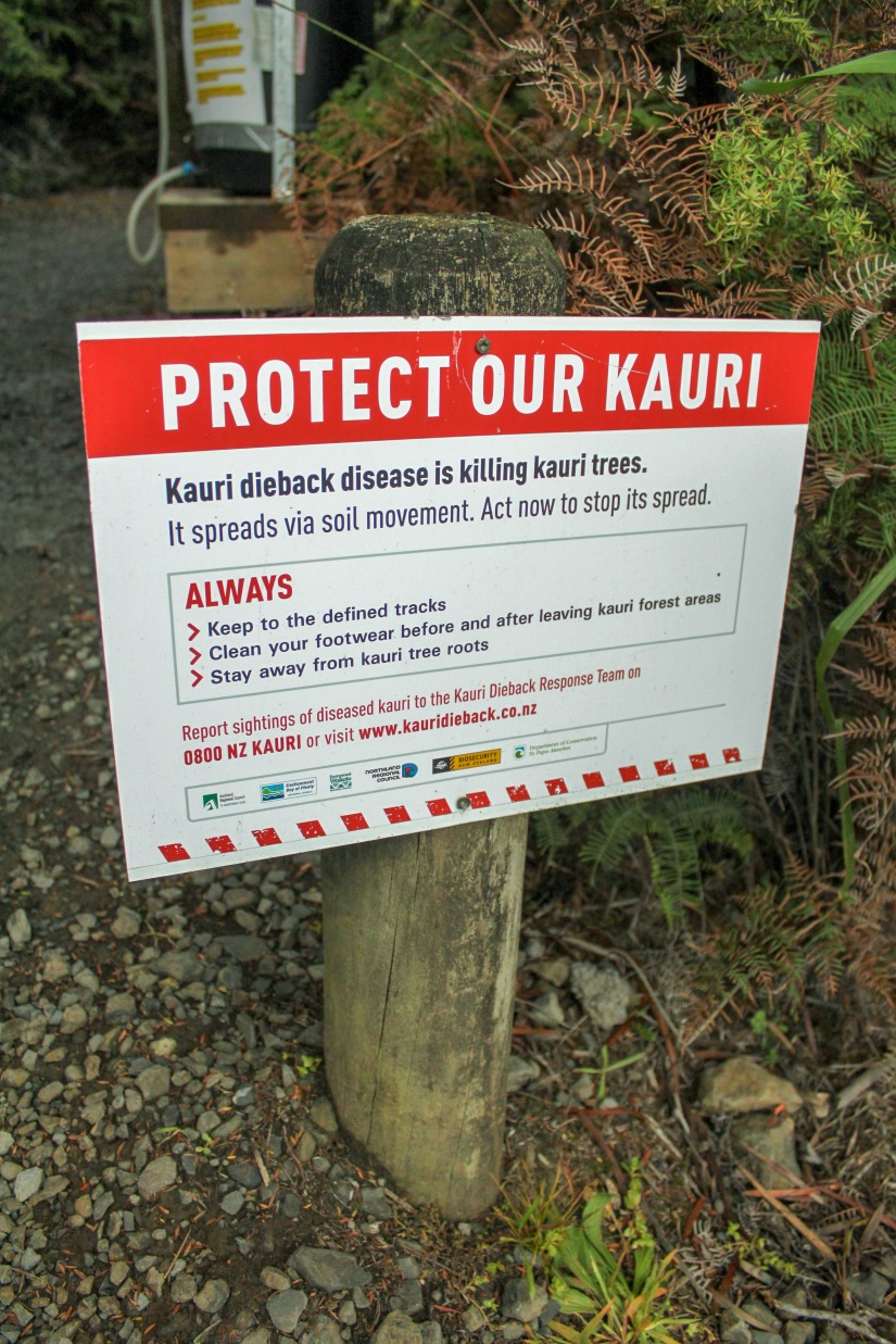 New Zealand: Kauri National Park
