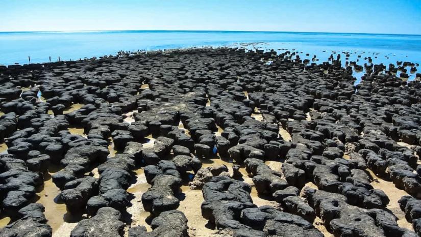 Stromatolites in Hamelin Pool Western Australia.jpg