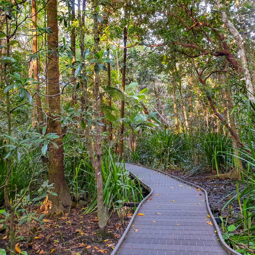 Mangrove walk Cape Trib.jpg