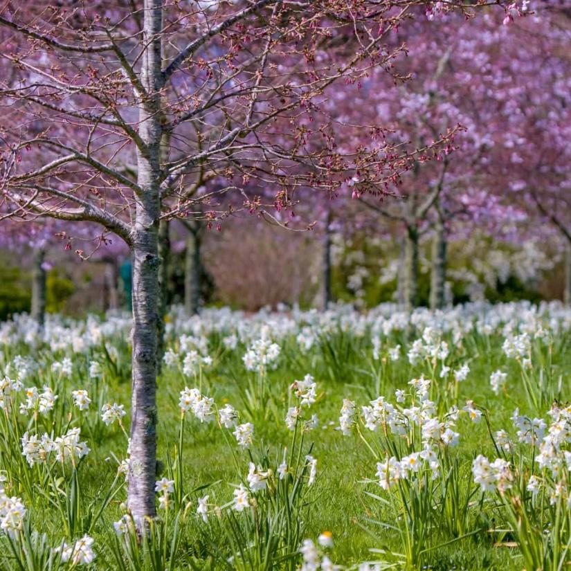 Spring Blossoms 2_edited.jpg