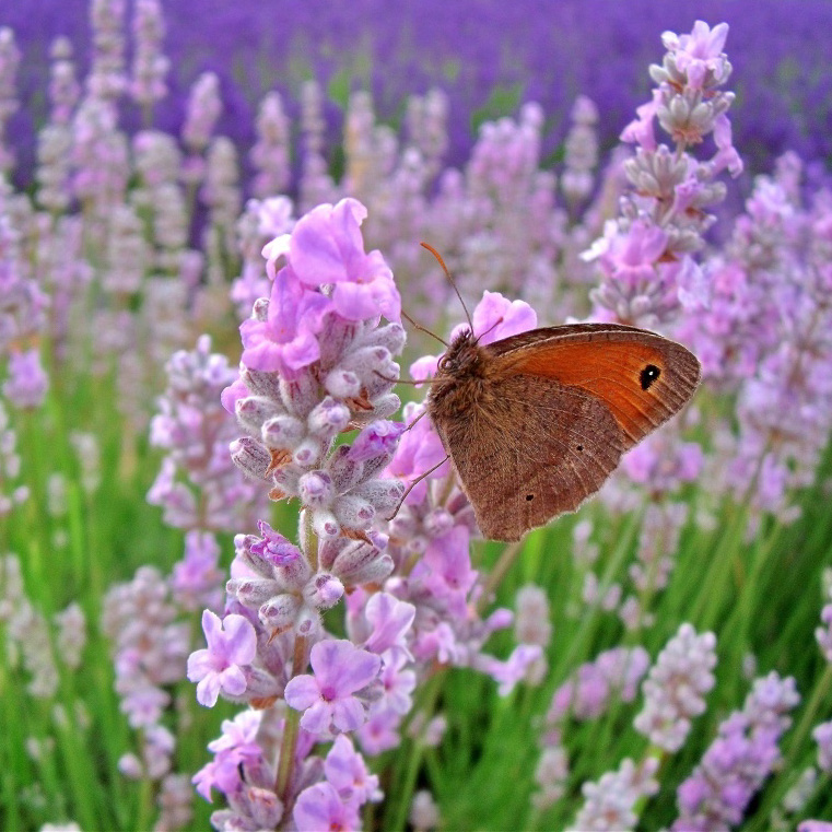 Butterfly on flower.jpg