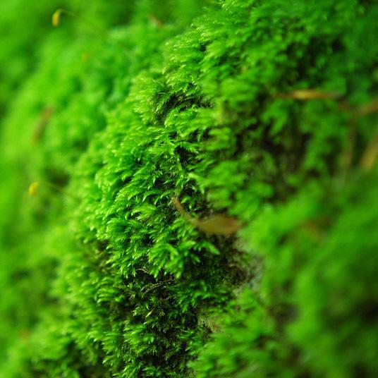 Green Moss_1_edited