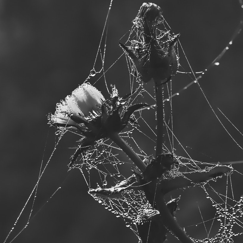 Lines - web_edited